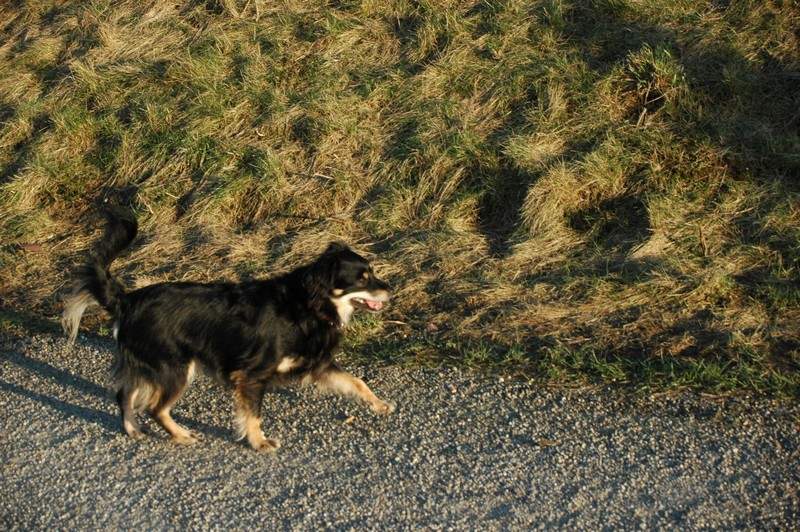 Hund (einer von vielen)