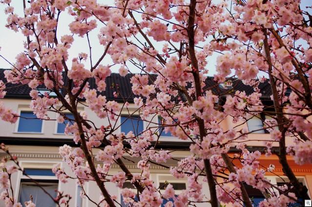 Blüten vor Häusern