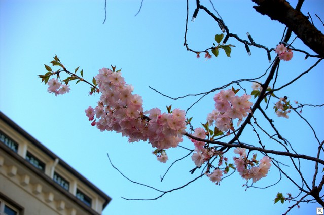 Blüten vor Hausdachecke