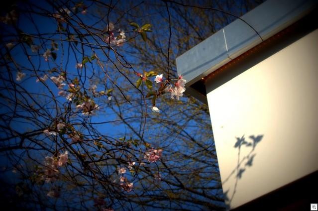 Blüten vor Eisdiele