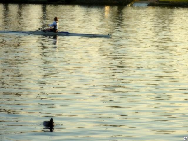 Ruderer und Ente