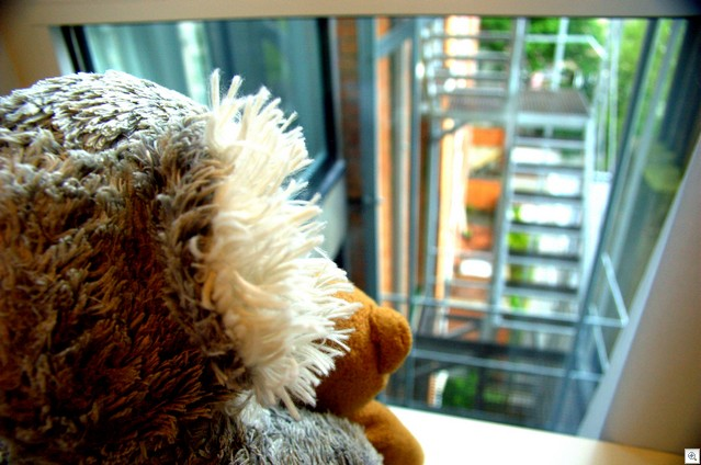 Koala und Bärchen