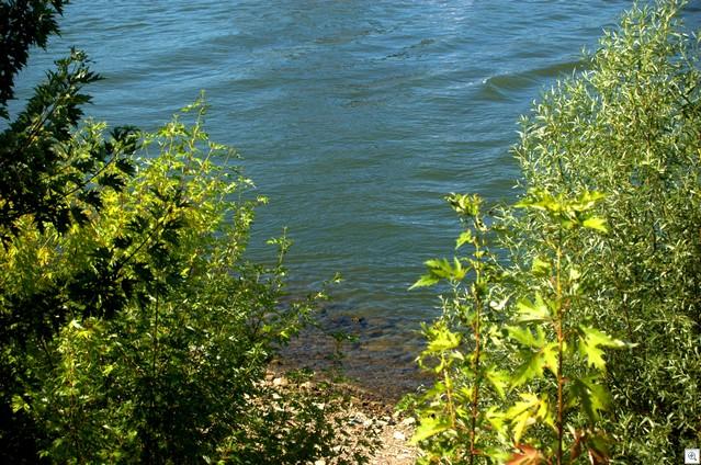 Rheinwasser