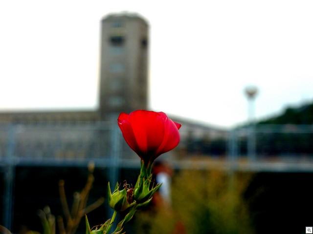 Mit Blume