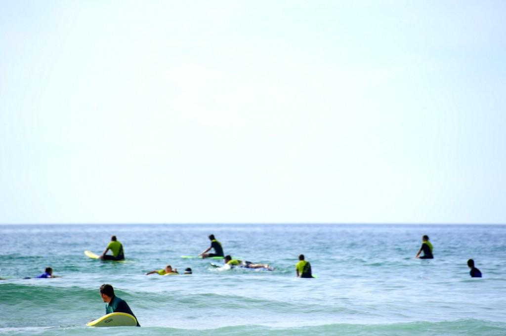 Immer noch Surferrobben